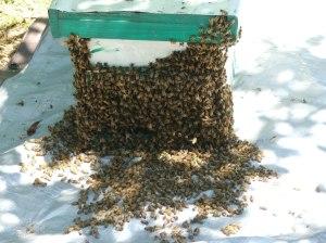 best nuc-swarm (1)